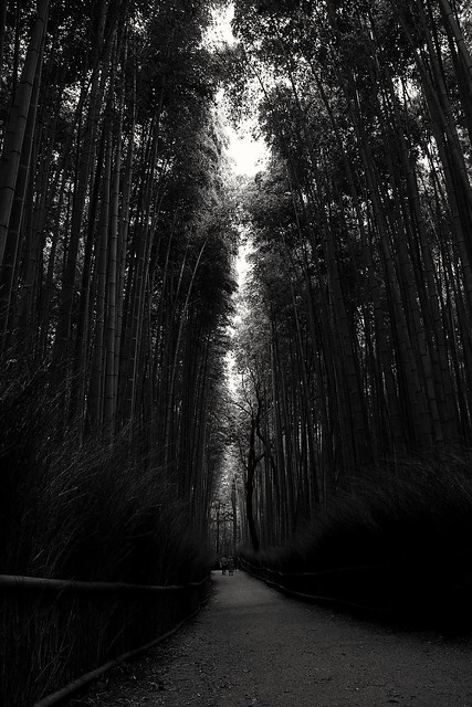 Breaking dawn at Bamboo Grove, Arashiyama, Kyoto, 2019