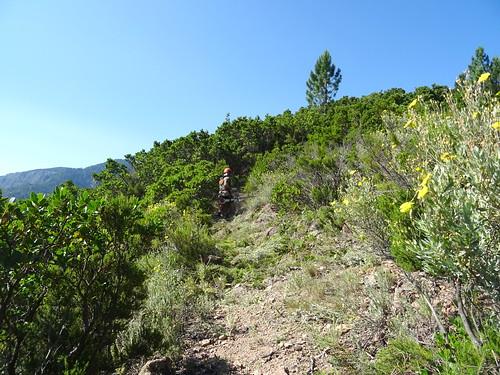 Dans le versant Est de Bocca di Ricu : débroussaillage par forte chaleur