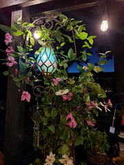 Clematis vine in the evening