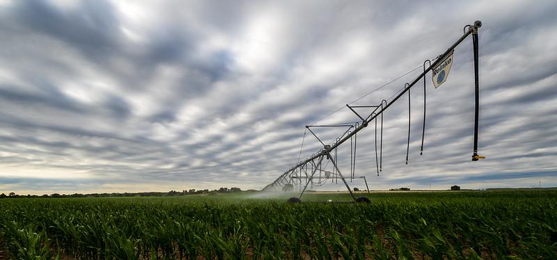 Corn irrigation