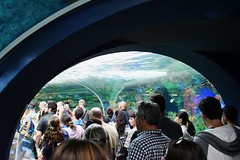 09-070 Shark Tunnel