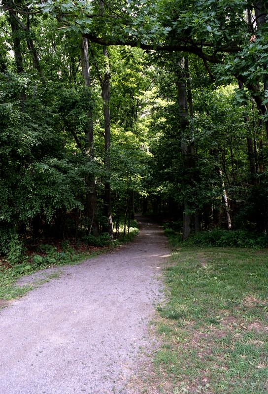 Wedgewood Park Path
