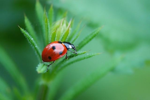 June ladybird/ladybug!