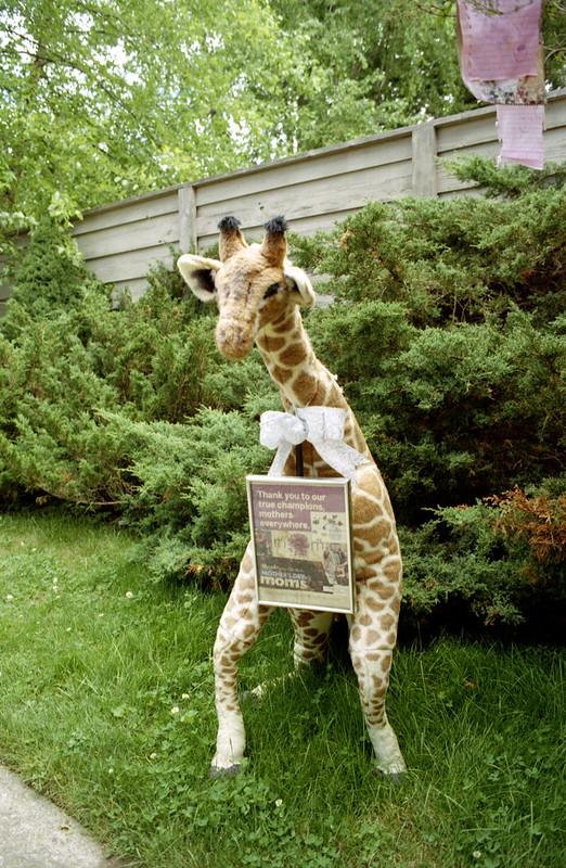 Big Stuffed Giraffe