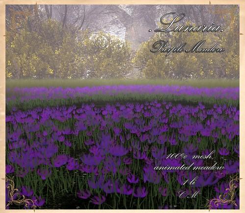 Purple Meadow MM
