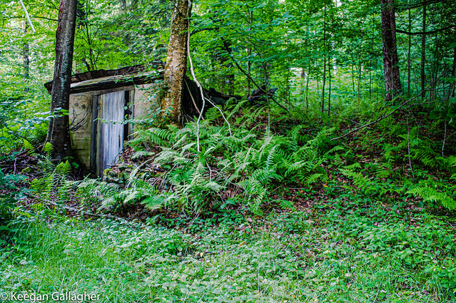 Forest Root Cellar
