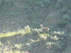 deer with 2 fawns