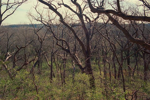 Guiding Branches