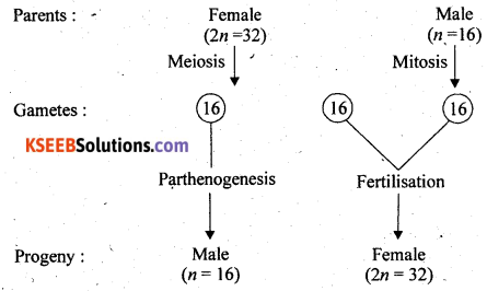 2nd PUC Biology Previous Year Question Paper March 2018 Q21