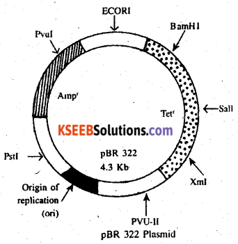 2nd PUC Biology Previous Year Question Paper March 2018 Q26