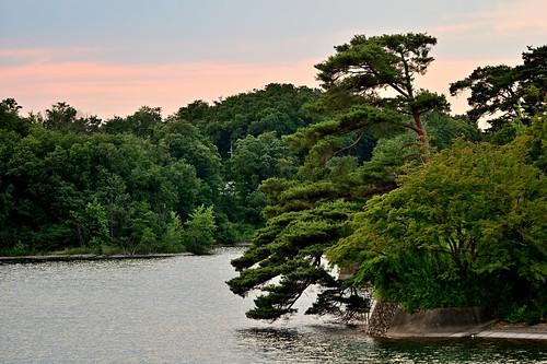 nature landscape lake water pine tree evening dusk sunset goldenhour sayamapark tokyo japan 自然 池 水面 松 夜景 夕暮れ 狭山公園 東京