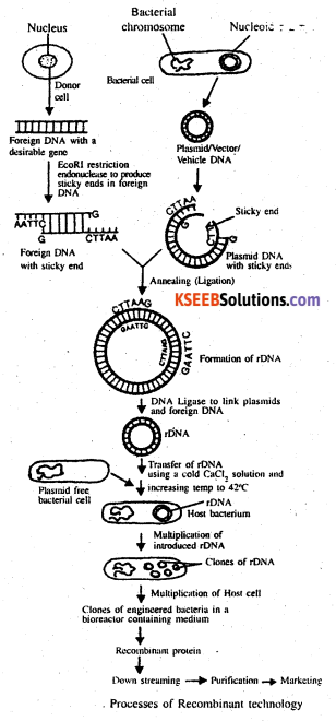 2nd PUC Biology Previous Year Question Paper March 2020 Q36(b)