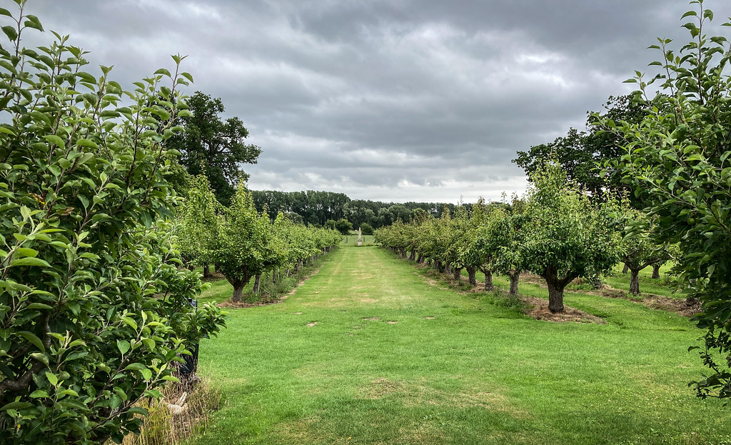 Vanishing Point at Waterperry Gardens