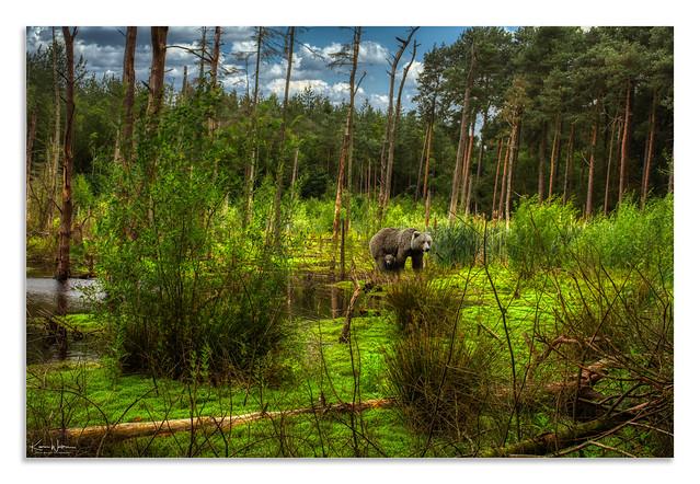 The Wetlands Delamere