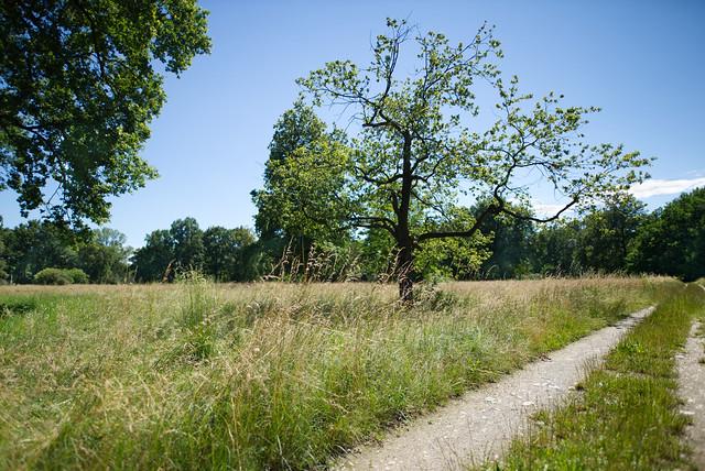 Field. Summer, wide.