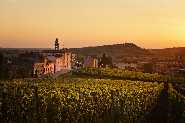ITALY- Soave Traditional Vineyards