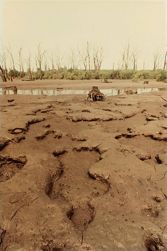 Ana Mendieta Untitled (Silueta Series, Iowa) 1979