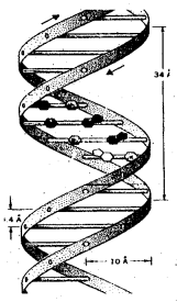2nd PUC Biology Previous Year Question Paper March 2018 Q33
