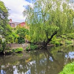 Trees over the canal at Preston