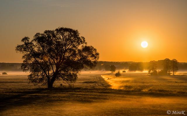 Sunrise with fog #2