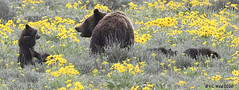 It's not advisable to sass your mother if she's a 350 lb grizzly bear