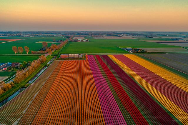 Dutch carpet.