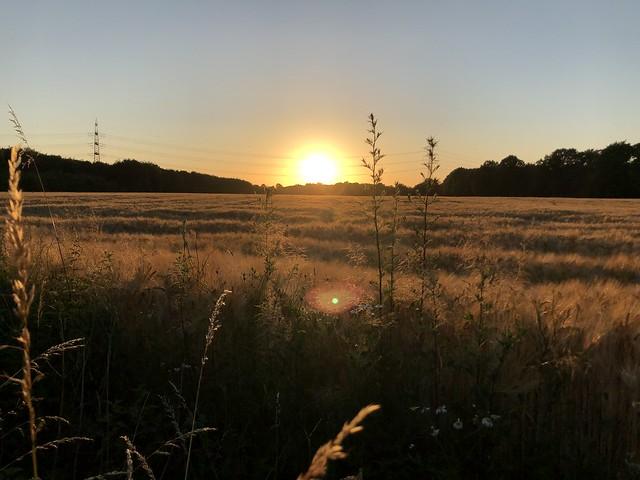 Light in the fields