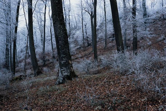183/366 Frozen forest
