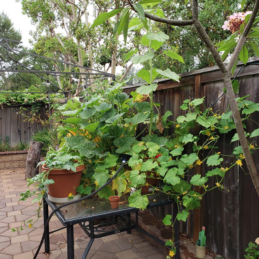 bombastic-garden
