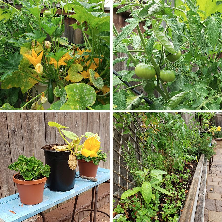 bombastic-garden-2