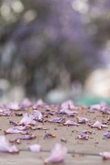 (fallen) petals