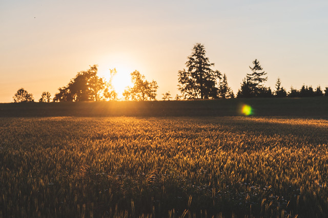 Sun Over the Fields (explored 02.07.2020 #152)