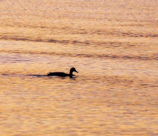 Swim in Early morning !!