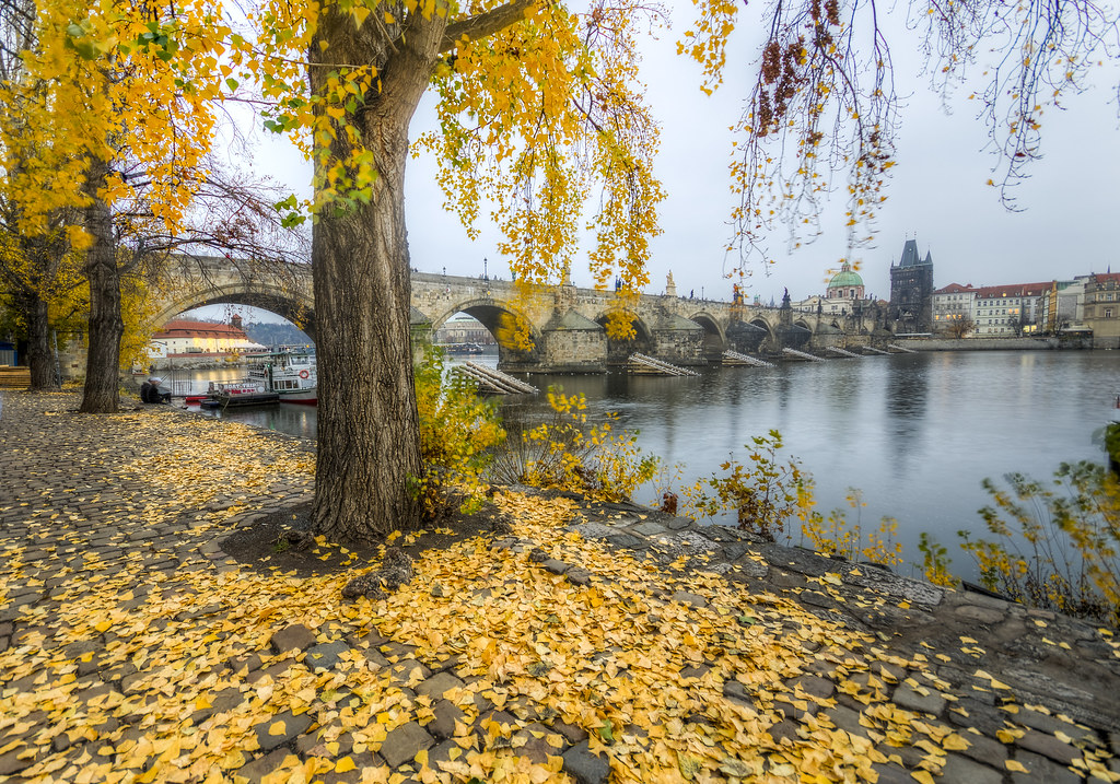 Yellow Leaves by Vltava