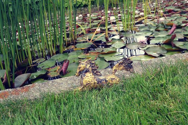 Soos Creek Botanical Garden and Heritage Center 3