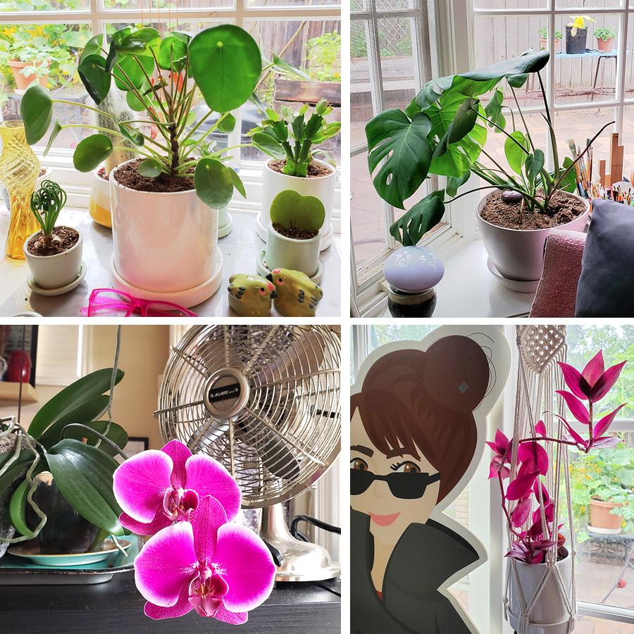 plants-everywhere