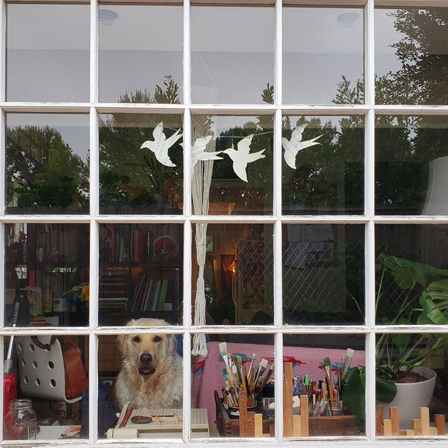 cody-in-the-window