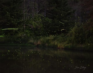 Fireflies over the pond.