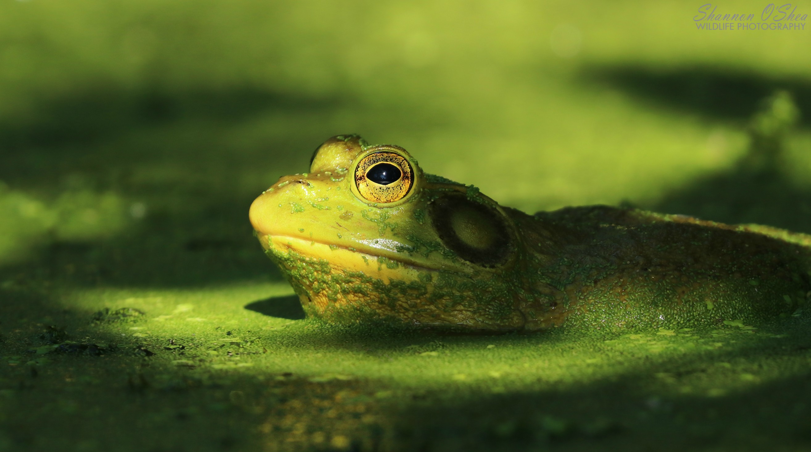 Today I will be happier than a frog at a princess convention