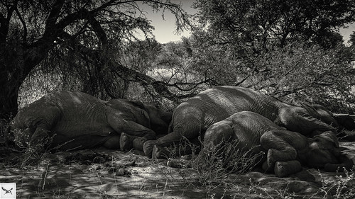 Sleeping Giants 2 | by Glen Fisher Photography
