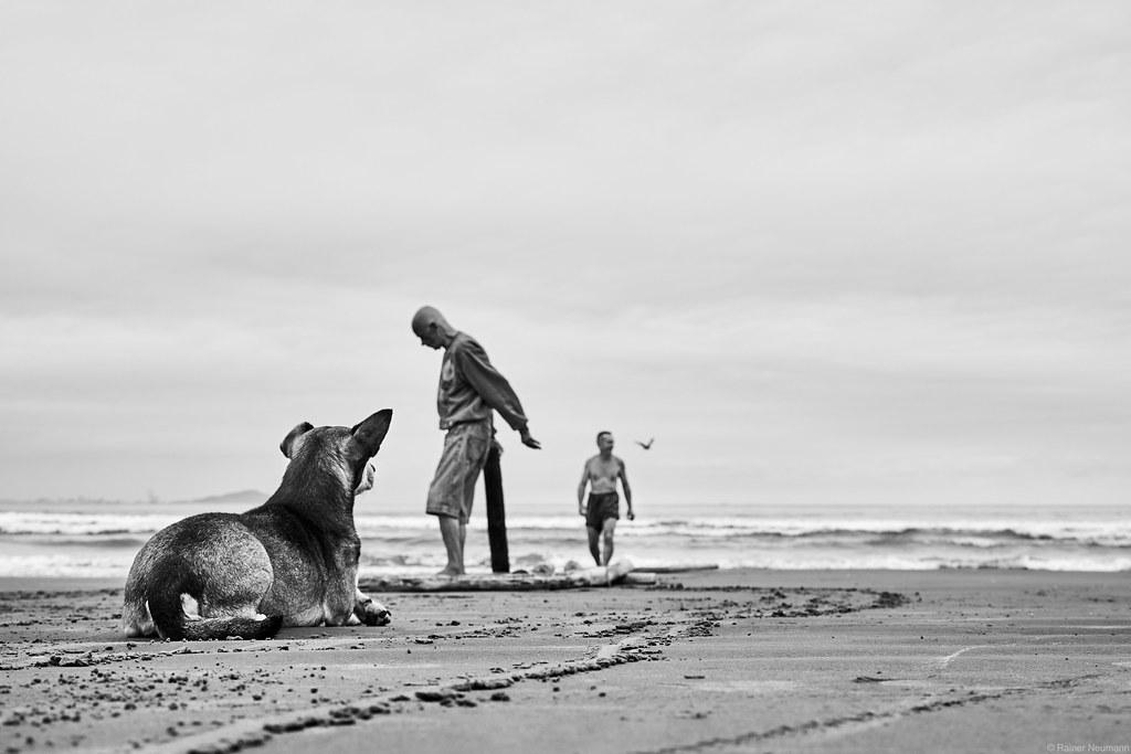 1 Hund und 2 Fischer