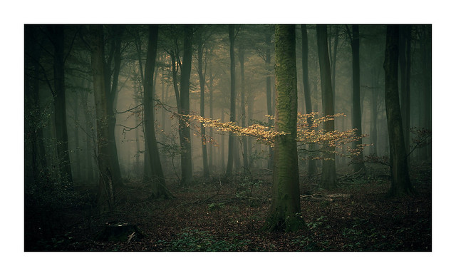 Friston Forest / October 27th