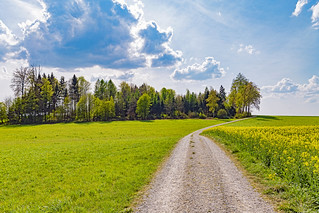 Way and canola field | by Tambako the Jaguar