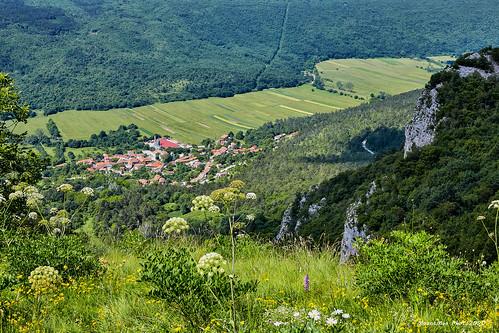 ćićarija lanišće laniškopolje istra istria croatia landscape krajolik stijene rockery trava grass šuma forest cvjetovi flowers flickrunitedaward