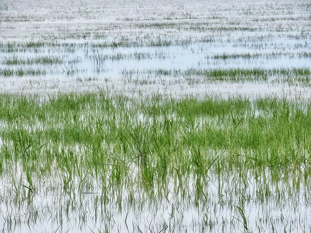 Acres of Swampy