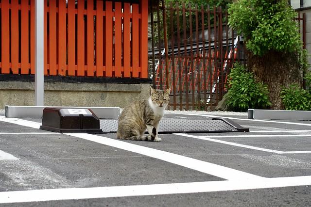 Today's Cat@2020ー07ー02
