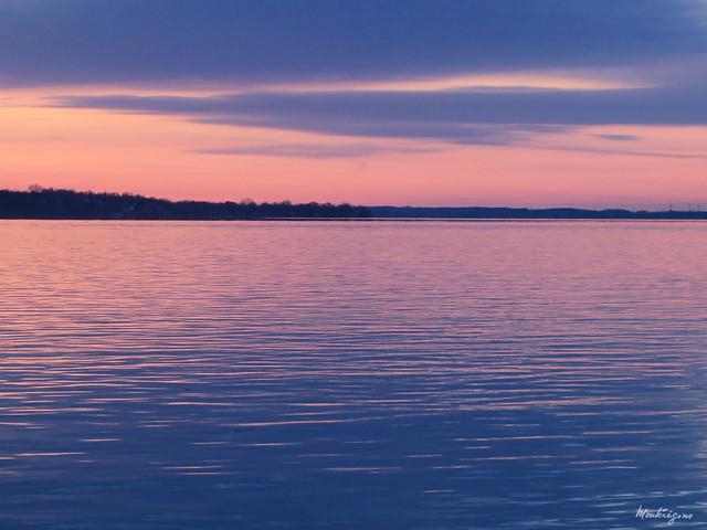 Purple morning - Matin pourpre
