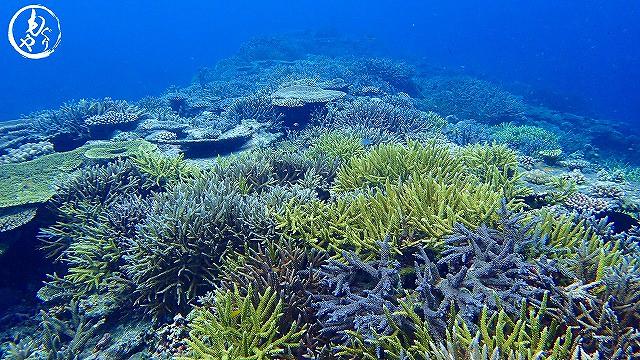 やっぱりすごい、このサンゴ達…