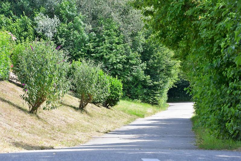 Landscape Aare path 02.07.2020