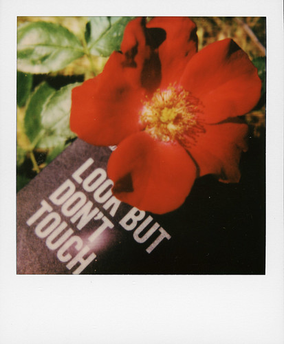 Playing with Polaroid darkslides ...
